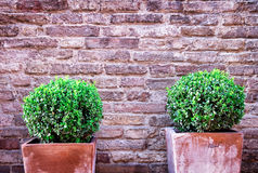 Little bush Royalty Free Stock Photography