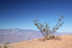 Little bush at Death Valley. On the top of the mountain in a blue sky Royalty Free Stock Photos