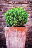Little bush Royalty Free Stock Image