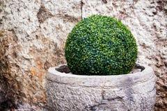 Little bush Royalty Free Stock Photos