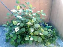 Little bush stock photo