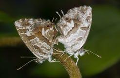 Little butterflies Stock Image