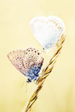 Little butterflies on a wheat stalk Stock Images