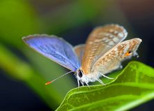 Little butterfly Stock Images
