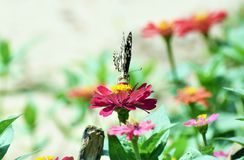 Little butterfly find food on flower Stock Photo