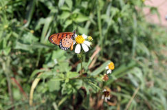 Little butterfly. On flower and forest Royalty Free Stock Photography