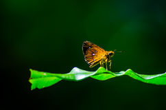 Little butterfly Royalty Free Stock Images