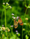 A little butterfly in a little garden breeding Stock Photography