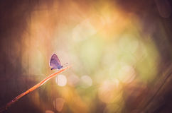 Little butterfly in the nature Stock Images