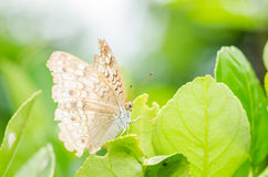Little butterfly in the nature Royalty Free Stock Photo