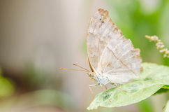 Little butterfly in the nature Royalty Free Stock Photography