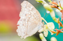 Little butterfly in the nature Royalty Free Stock Image