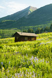 A little cabin in a field of wildflowers Royalty Free Stock Photo