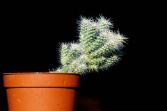 Little cactus Stock Image