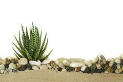 Little cactus Royalty Free Stock Photo