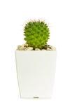 Little cactus Stock Photos