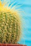 Little Cactus plant Stock Image