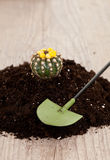 Little cactus plant Stock Photos