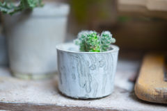 Little cactus plant Stock Photography