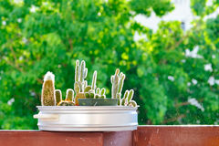 Little cactus Stock Photography