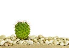 Little cactus Stock Photo