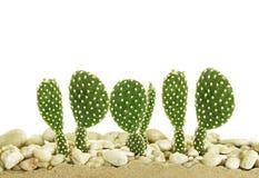 Little cactus Stock Image