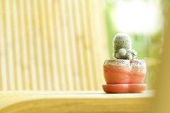Little cactus on wood table Royalty Free Stock Images