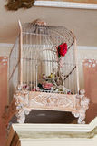 Little cage. Cage with decorative birds inside Royalty Free Stock Images