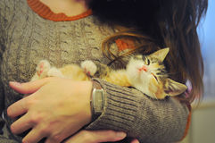 Little callico cat in the arms of a girl. Little callico cat with spotted fur lying in the arms of a girl. The kitten is sleepy; it squints in joy and relaxation Stock Photography