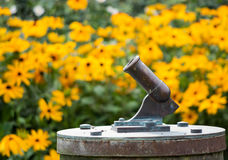 Little canon with yellow flowers in the background Royalty Free Stock Photo