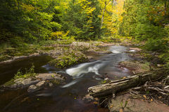 Little Carp River Autumn Stock Photo