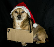 Little cartel dog. A little brown christmas dog and cartel Royalty Free Stock Photo