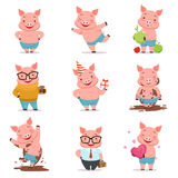 Little cartoon pigs characters posing in different situations set of vector illustrations Stock Photography