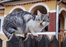 Little cat Stock Photos