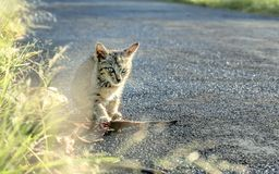 Little cat alone in the side of the road. Pay attention to the road ahead Royalty Free Stock Images