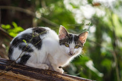 Little cat Royalty Free Stock Photography