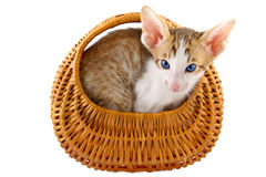 Little cat in basket Stock Photos