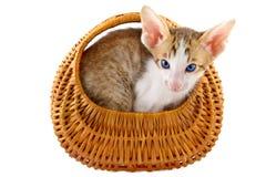 Little cat in basket Stock Photos
