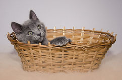 Little Cat in the basket. Little Cat sitting in the basket stock photo