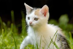 Little cat with beautiful eyes. In garden Royalty Free Stock Images