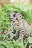 Little cat Royalty Free Stock Image