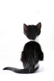 Little cat from behind against a white background Stock Photos