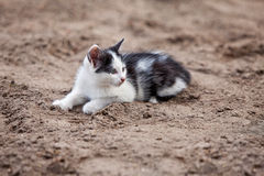 Little cat. Black and white sweet kitty laying on ground stock image