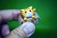 Little cut cat in an open box royalty free stock photos