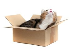 Little cat in carton Royalty Free Stock Photos