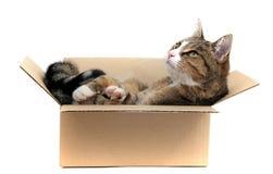 Little cat in carton stock photo