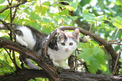 A little cat is climbing. In a tree Stock Images