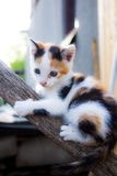 Little cat climbing on a tree Royalty Free Stock Photo