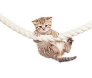 Little cat clutching at rope isolated on white Royalty Free Stock Images