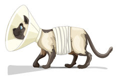 Little cat with collar and bandage. Illustration Stock Images